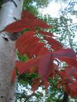 色づき始めた葉の赤が目立っていた!