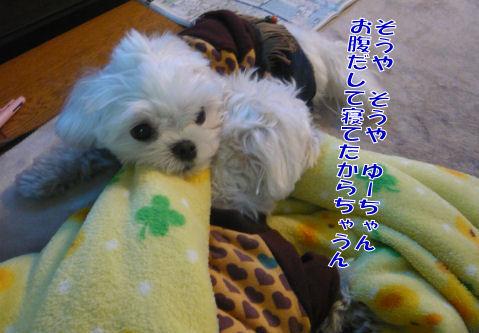 t-P1070511.jpg