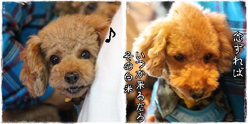 awaji4.jpg