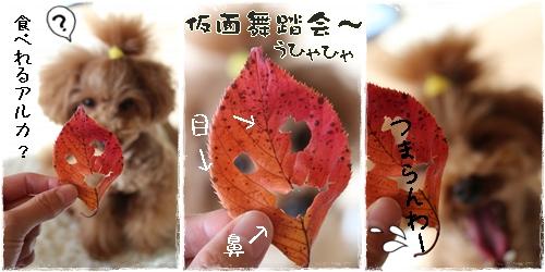 fuyu2.jpg