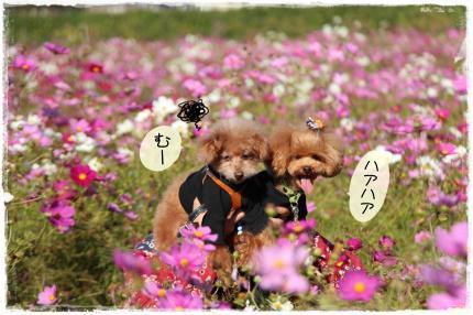 shiga9_s.jpg