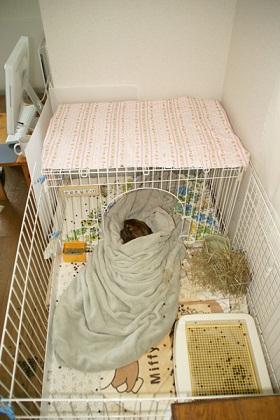 エアコンを入れても入れなくても寒がりのべるちゃんは自分でこうして毛布にくるまっています。(夏でも毛布!)じーちゃんです。