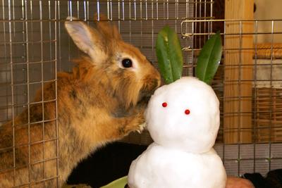 これこれ、雪だるまさんが痛いって言ってますよ!