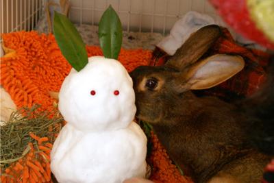 おお、雪だるまかあ~なつかしいのう。って感じで食べてます。