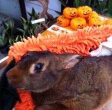 べるちゃんとハロウィンかぼちゃさんたち