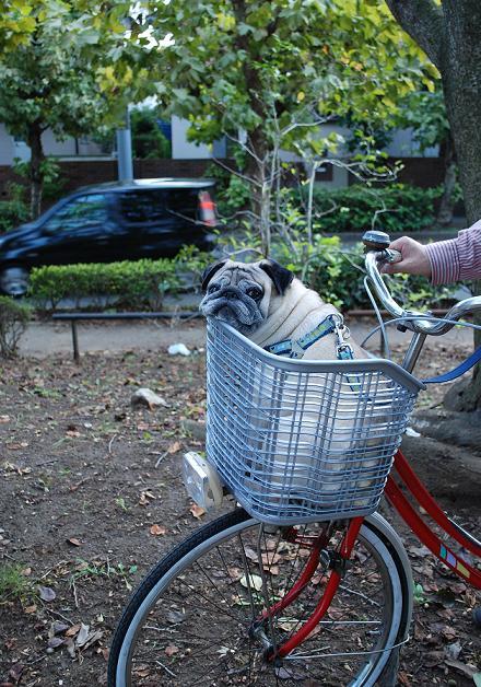 自転車に乗るのも結構好き・・・
