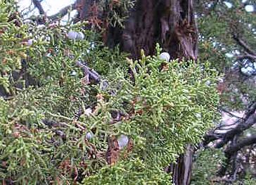 navajo national monument 0030003.jpg