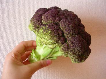 紫カリフラワー0001.jpg