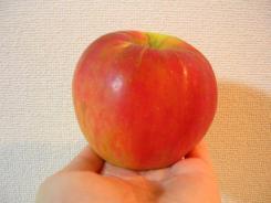 リンゴの季節 0010001.jpg