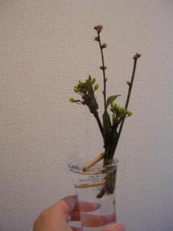 モモの花 0030003.jpg