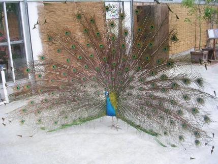花鳥園 0070007.jpg