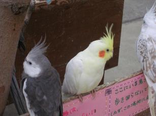 花鳥園2 0040004.jpg