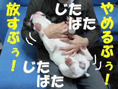 1-1_20101122135908.jpg