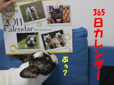1-1_20101213135117.jpg
