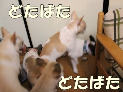 1-1_20111012135139.jpg