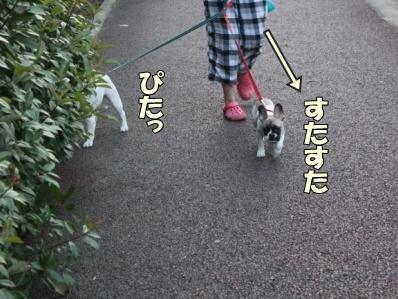 10-1_20110803134918.jpg