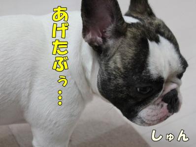 10-1_20111017164007.jpg