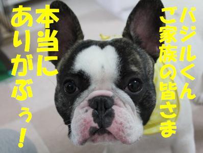 10_20110114095636.jpg