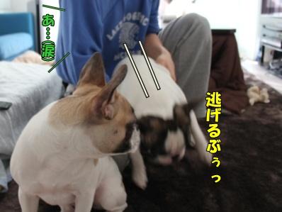 11-1_20120111134257.jpg