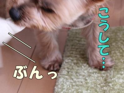 11-1_20120117164731.jpg