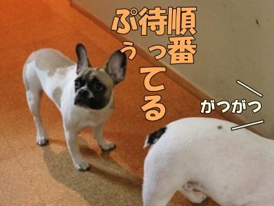 11_20111110091954.jpg