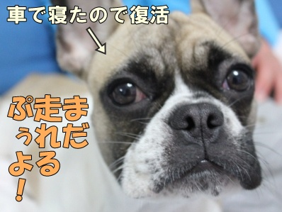 11_20111110112339.jpg