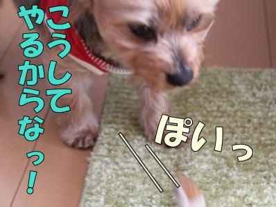 12-1_20120117164730.jpg