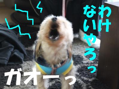12_20110118121852.jpg