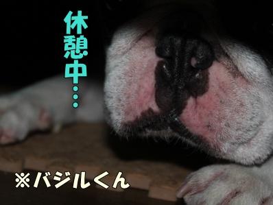 13_20120125165910.jpg