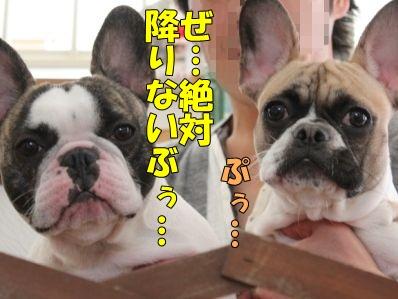 14-1_20120117164826.jpg
