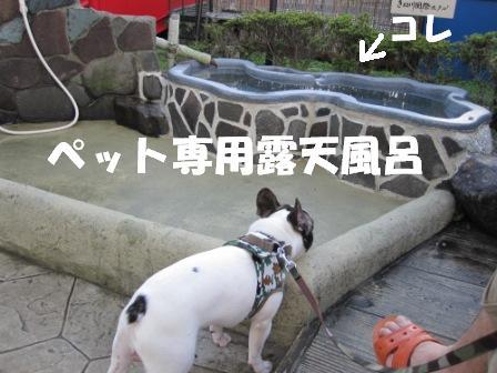 1_20100922143750.jpg