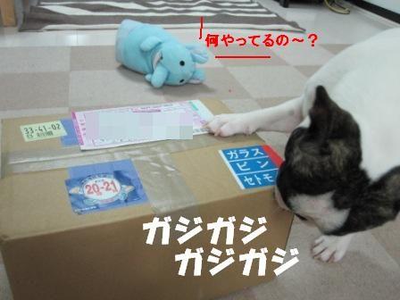 1_20101008100415.jpg