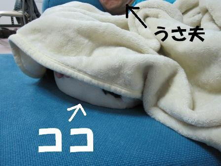 1_20101104131851.jpg