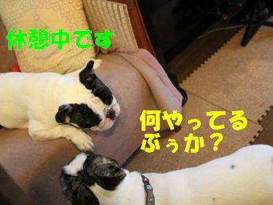 1_20110113152837.jpg