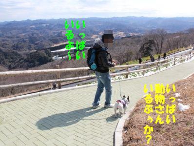 1_20110216133723.jpg