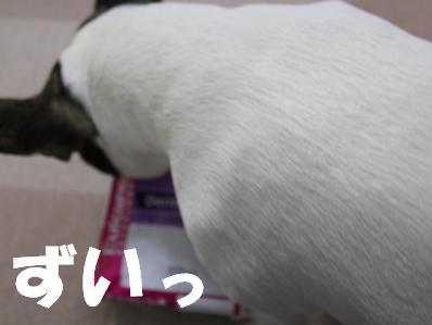 1_20110222164659.jpg