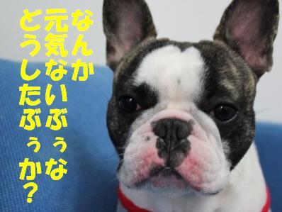 1_20110302101750.jpg
