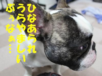 1_20110303151151.jpg