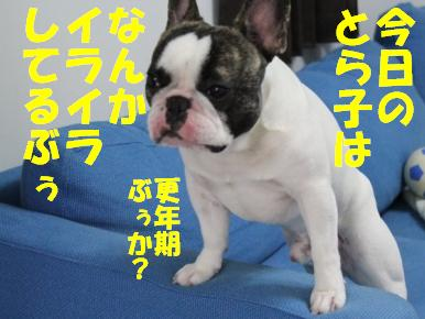 1_20110304145018.jpg