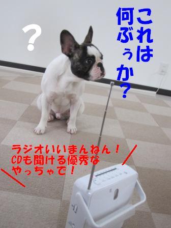2-1_20100706103413.jpg