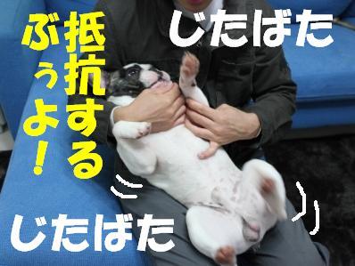 2-1_20101122135907.jpg