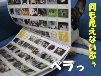 2-1_20101213135117.jpg