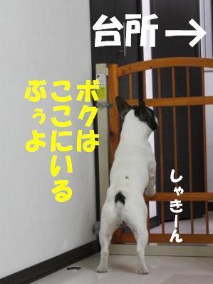 2-1_20110203162531.jpg