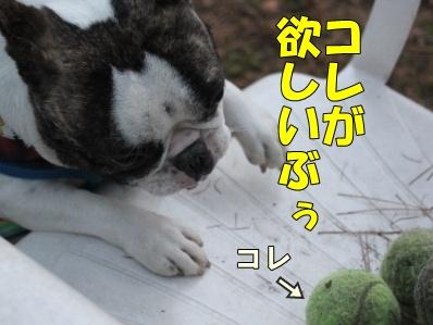 2-1_20111110091933.jpg