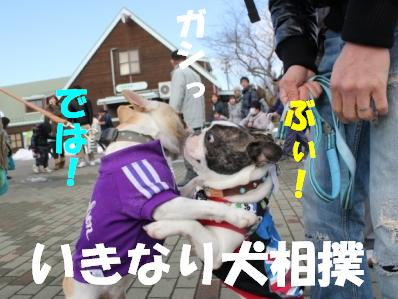 犬相撲1-1