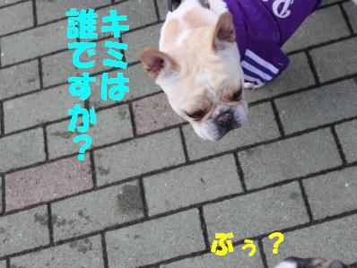 ハッチくん1-1