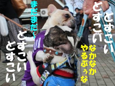 犬相撲3-1