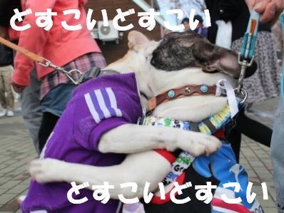 犬相撲2-1