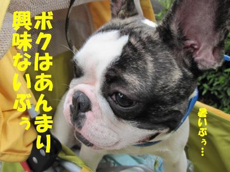 2_20100924101422.jpg