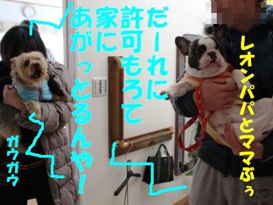2_20110112153011.jpg